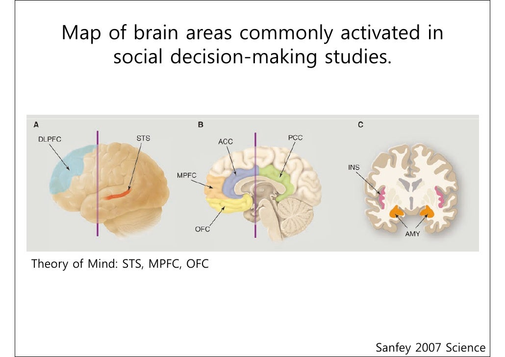 the neuroscience of social decision-making pdf