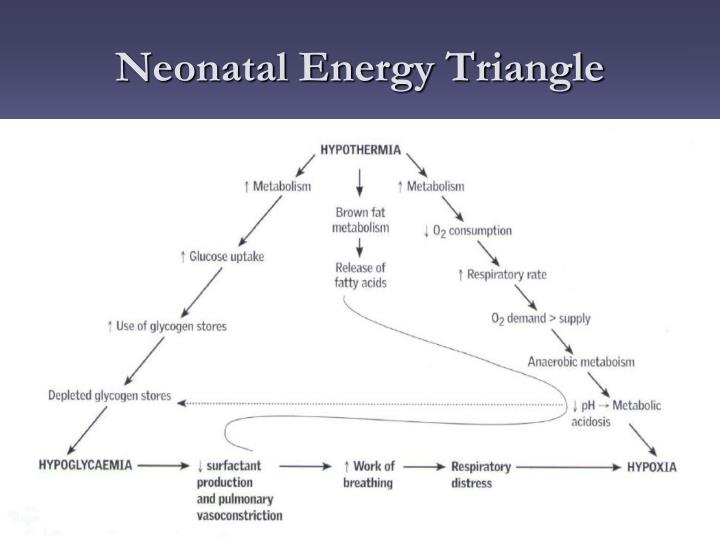 the neonatal energy triangle pdf